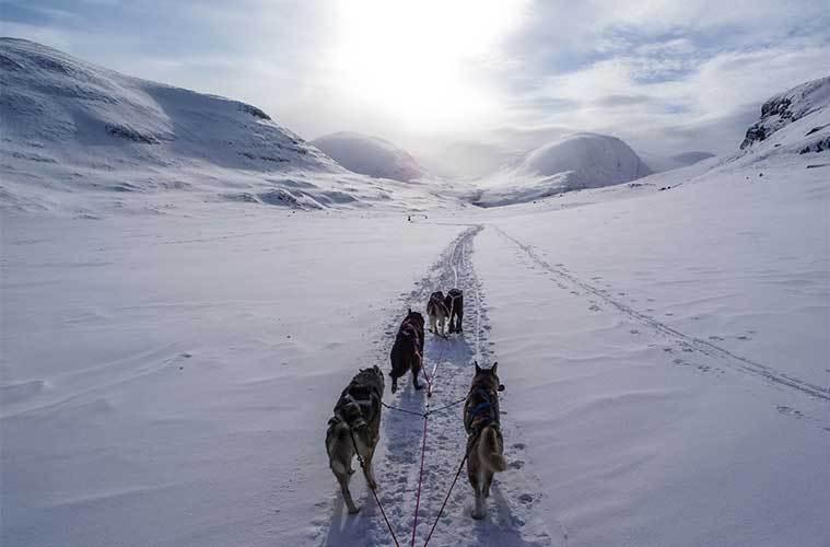 El Mushing, mejor conocido como Carreras de Trineos y Esquís tirados por Perros / Foto: James Padolsey