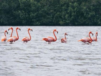 Flamingos at Guanaroca Lagoon