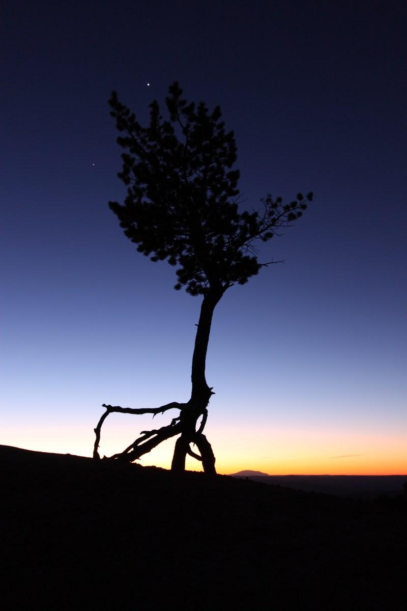 Ballerina Tree, Bryce Canyon NP, USA