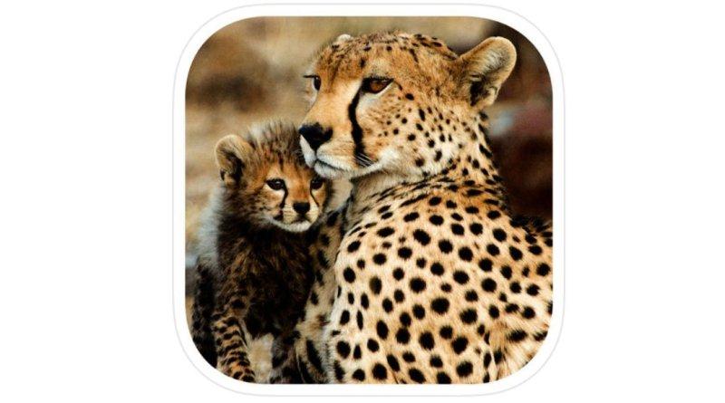 Stuarts' African Mammals Field Guide App