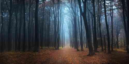 black forest - Dibalik Keindahan Hutan-hutan ini, Ternyata Memiliki Kisah Menyeramkan