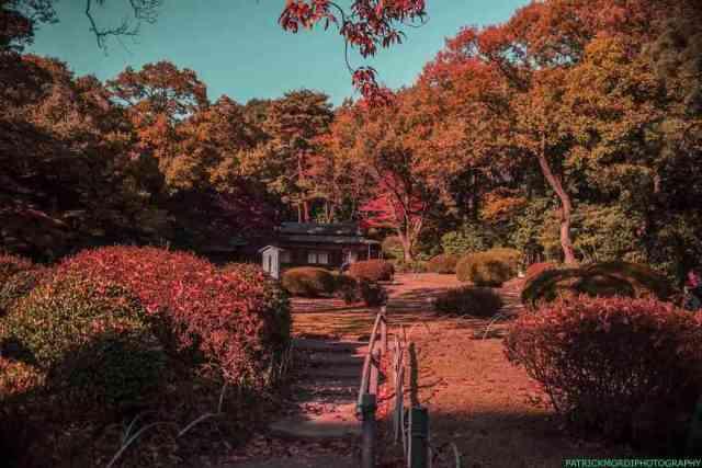 Tokyo 9 - Keindahan Tokyo Membuat Fotografer Ini Menambah Kecintaannya Pada Fotografi Lagi