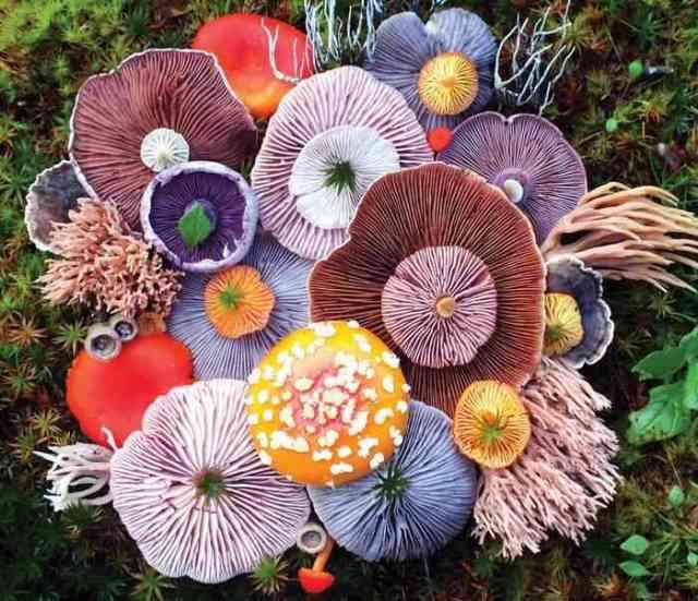 mushrooms nature medley jill bliss 1 - Wow...Indahnya Jamur Liar Ini Bikin Takjub Bagi Yang Melihatnya