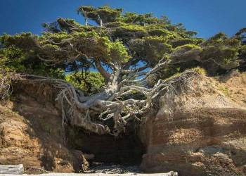 pohon yang hidup diantara bebatuan walaupun bagian bawahnya tidak ada tanah - 10+ Pohon unik ini tetap hidup walaupun kondisi lingkungan tidak memungkinkan