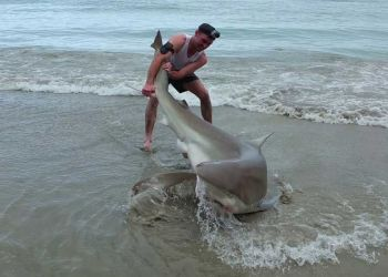 mancing hiu tangan kosong - Luar Biasa! Pria ini Menangkap Ikan Hiu dengan Tangan Kosong