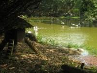 Wetland5-e1350634001440