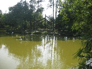 Flamingo Pond at the Botanical Garden