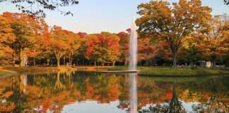 代代木公園楓葉