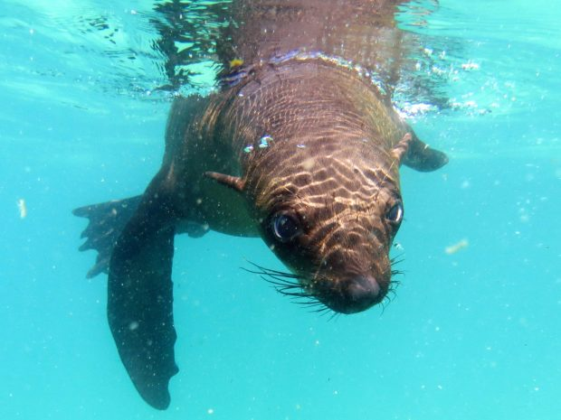 south africa fur seals cape