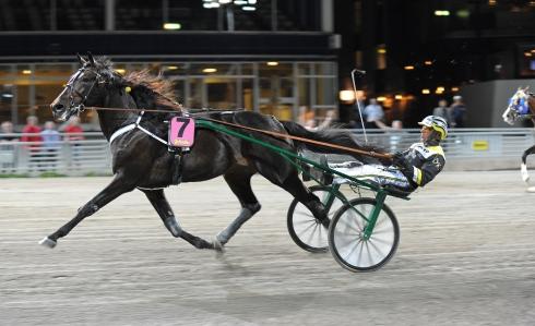 Ponziopilato Stra med Ôrjan Kihlström, da parret vandt trænersejr nummer 1.000 til Stefan Hultman. Kanal 75