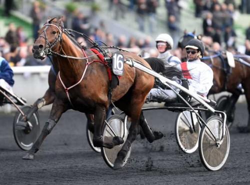 Elegante Tiedo d'Etang -. her for sulky . er favorit i verdens største monteløb, Prix de Cornulier i eftermiddag. FDoto Gerard Forni