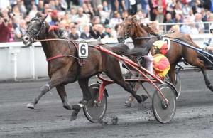 Voltigeur de Myrt med Gabriele Gelormini er favorit i det første test-løb til Prix d'Amerique, der køres i eftermiddag på Vincennes. Foto Gerard Forni