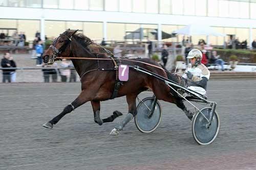Amulet vandt sin 6. sejr i blot 7 starter, Foto Martin Timm Holmstav