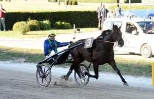 Brillantissime med Pierre Vercurysse vandt sikkert Grand Premio Continentale. Foto Gerard Forini