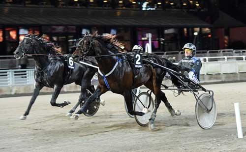 Cash Gamble med Per Lennartsson er det formodede bedste svenske kort i UET Grand Prix. Parret vandt i aftes på Solvalla. Foto Kanal 75