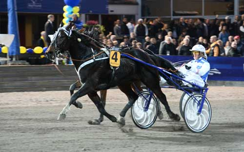 Huge Star med Peter Ingves vinder sidste afdeling af V75-spillet g sikre dermed en sekscifret gevinst til 7 danske spillere. Foto Kanal 75
