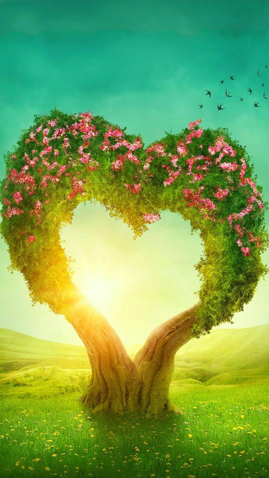 Romantic Fantasy Love Blossoms Tree Flowers Heart in Nature Love Wallpapers.