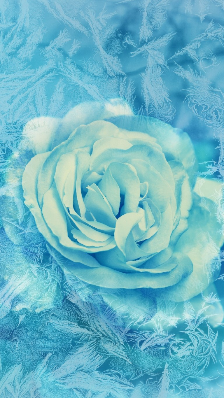 Blue and White Rose Nokia 2.2 HD Wallpapers
