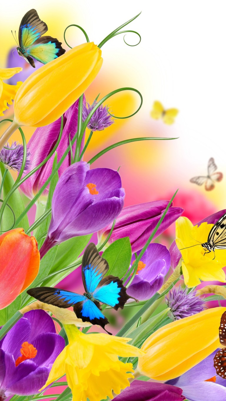 Butterfly on Beautiful Tulips Colorful HD Wallpaper
