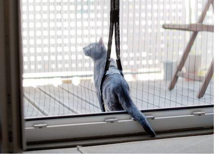 Um die unerwünschten Eindringlinge effektiv und dauerhaft auszusperren, müssen Fenster und Türen nicht ständig geschlossen bleiben.