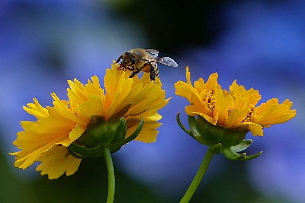 So machen Insekten keinen Stich