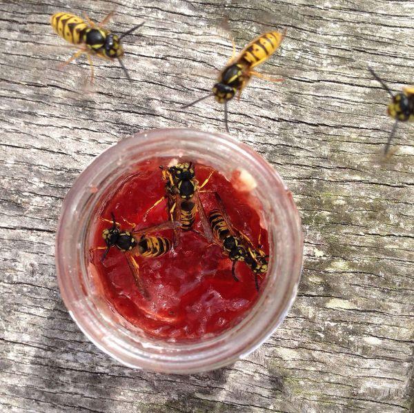 Insektenstich2jpg