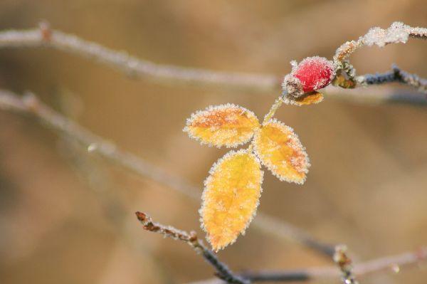Trotz Klimawandel ist Frostschutz für Bäume und Pflanzen wichtig