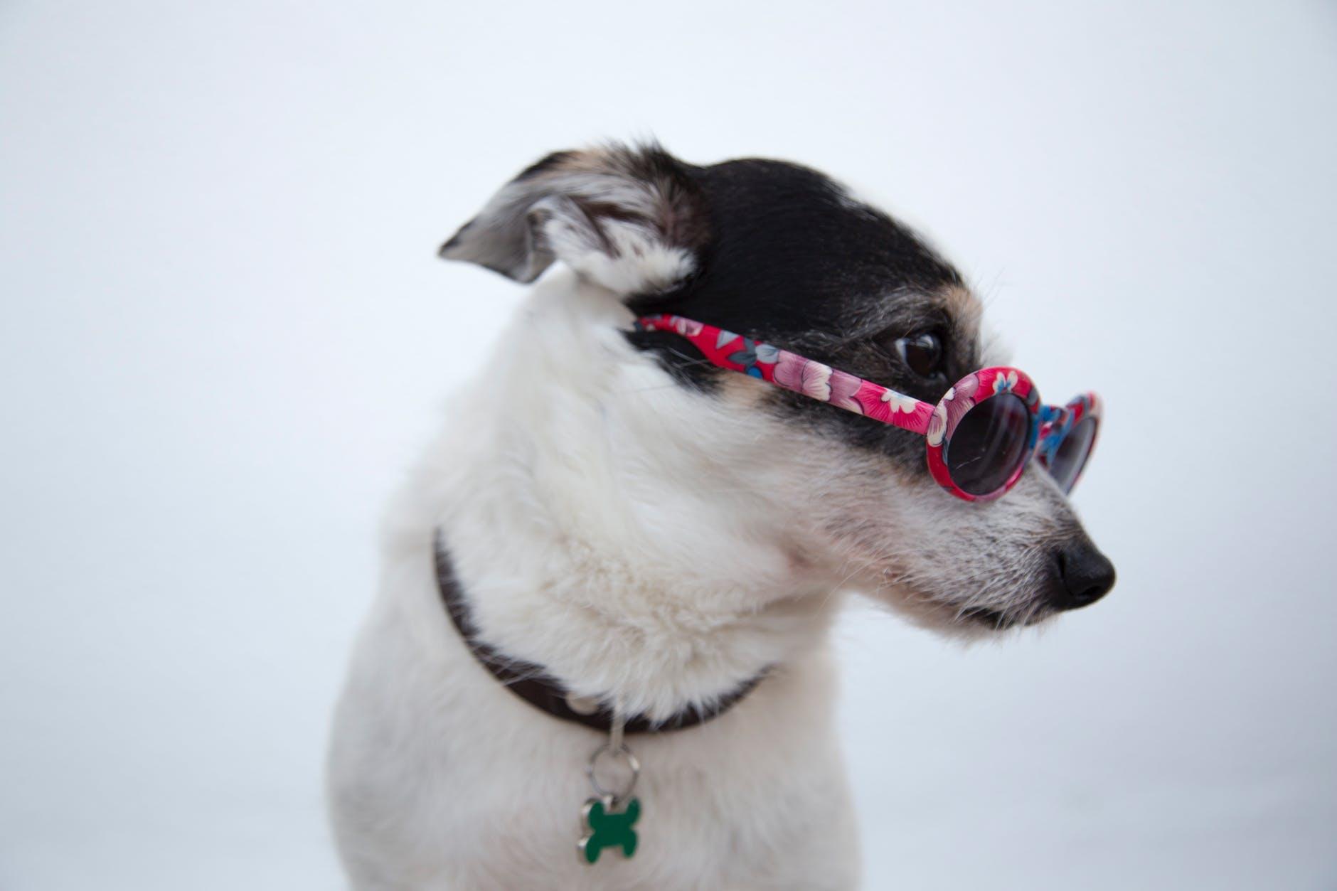 Wie man den Hund vor Sonnenbrand schützt