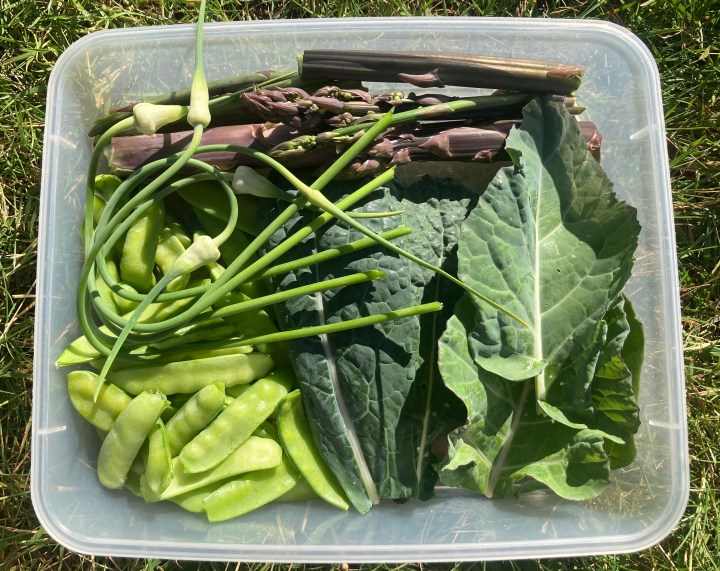 Tupperware of fresh picked vegetables