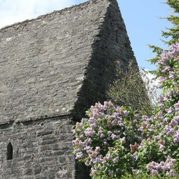 Vikings, Rebels, Saints and Scribes: The Heritage Town of Kells