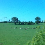 between Heuston and Portlaoise Co. Laois, Leinster