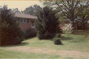 my childhood home with spruce trees