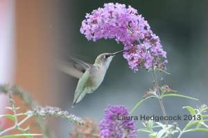 Hummingbird is a small thing