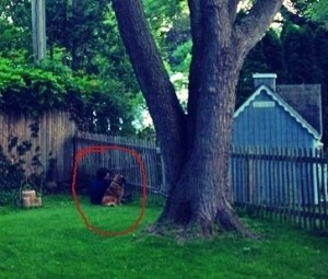 Mary sitting at the fence with her dog Indy