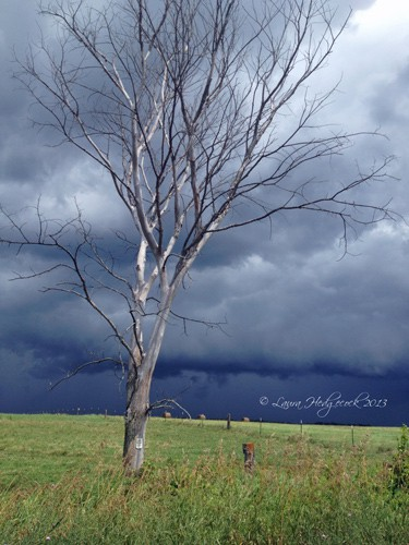 lonely-tree-clair-michigan