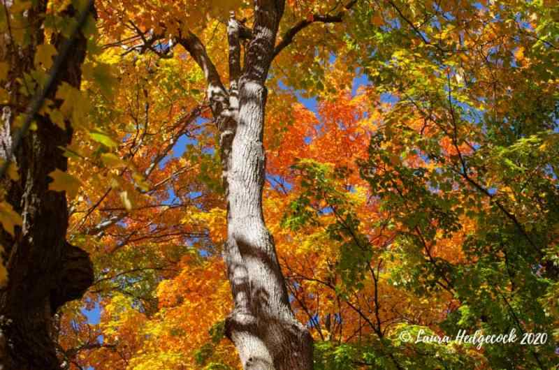 Fall colors fall story prompt