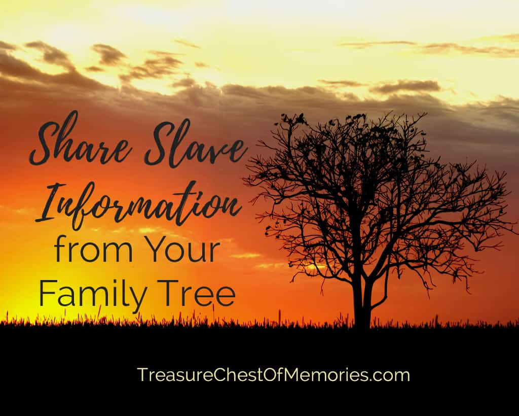 Share SlaveTree against red yellow sunset