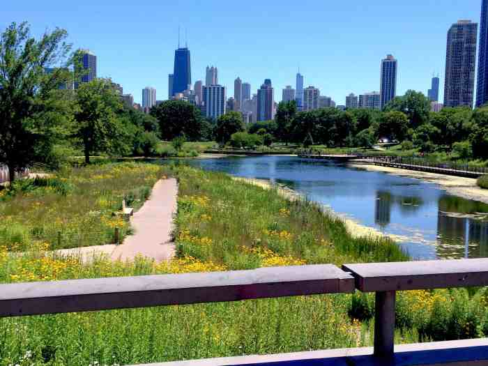 Downtown Chicago from Lincoln Park Zoo