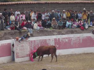 The bull fight in Socos, Peru!