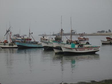 Pisco & Paracas (13)