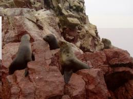 Sea Lions enjoying basking in the sun on the rock formations!