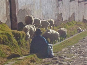 Bolivian women tending to her sheep on Isla del Sol.