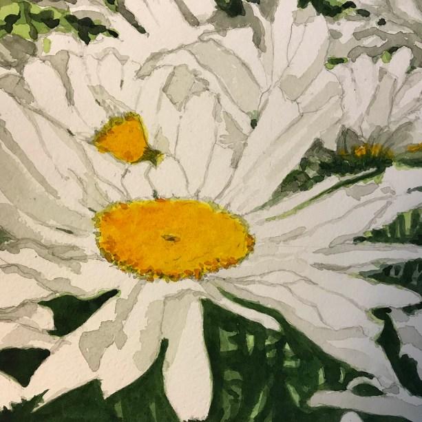Daisy Sunrise 1