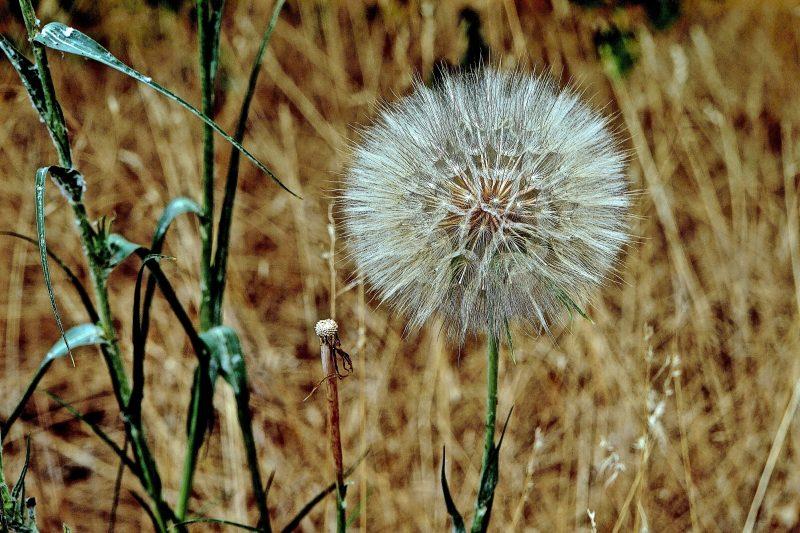 Make a Wish, digital photograph