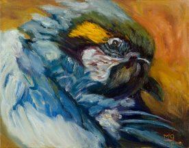 Cole, parrot_lores