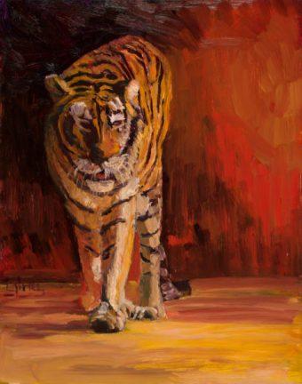 Cole, tiger_lores