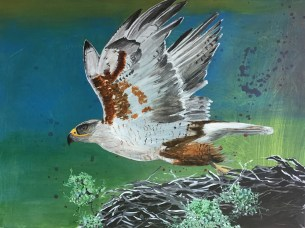Ferruginous Hawk Take Off, acrylic on canvas, 16 x 20""