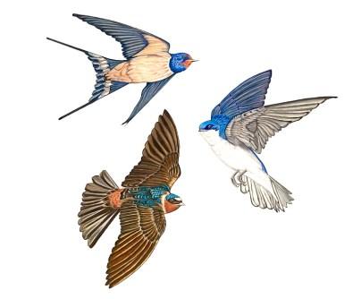 """""""Trio In Flight"""", colored pencil on paper"""