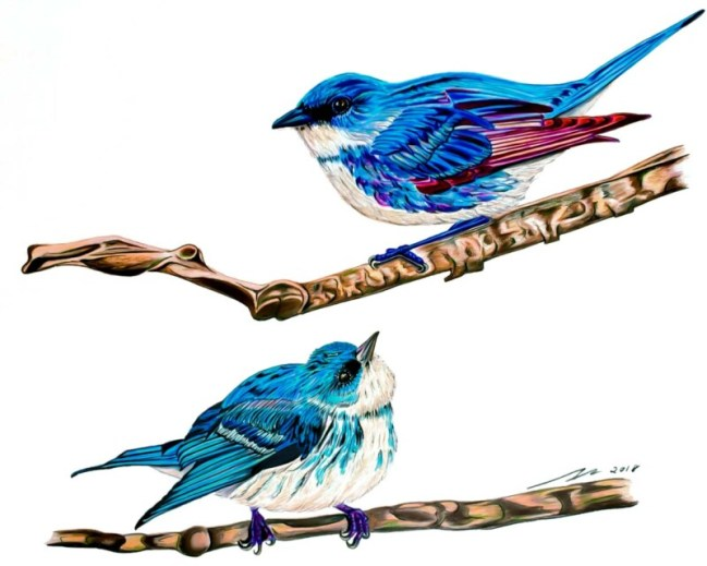 """""""Curious Warbler"""", Colored pencil on paper"""
