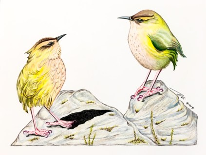 """""""Rock Wrens in Conversation"""", colored pencil on paper"""